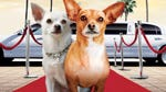 """Image for the Film programme """"Beverly Hills Chihuahua 2"""""""