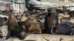 """Image for the Nature programme """"Africa's Deadliest: Best Of"""""""