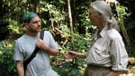 "Image for the Nature programme ""Almost Human with Jane Goodall"""